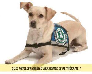 Chiens-de-service-psychiatrique-meilleur-chien-d'Assistance-et-de-Thérapie-08