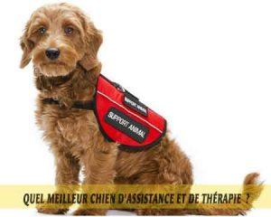 Chiens-de-soutien-émotionnel-meilleur-chien-d'Assistance-et-de-Thérapie-10