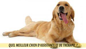 Golden-retrievers-meilleur-chien-d'Assistance-et-de-Thérapie.03