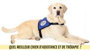 Labrador-un-meilleur-chien-d'Assistance-et-de-Thérapie