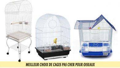 Meilleur-choix-de-cages-pas-cher-pour-oiseaux-00