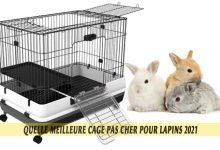 Quelle-meilleure-cage-pas-cher-pour-lapins-2021-00