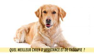 Retriever-un-meilleur-chien-d'Assistance-et-de-Thérapie.02