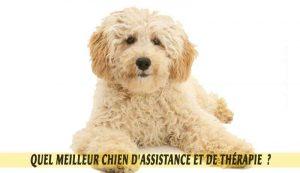 caniche-meilleur-chien-d'Assistance-et-de-Thérapie.05
