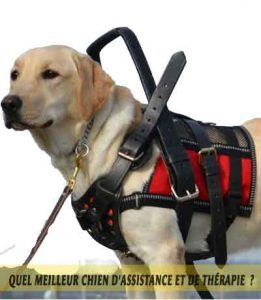 chiens-d'assistance-meilleur-chien-d'Assistance-et-de-Thérapie-