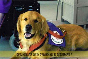 chiens-d'assistance-meilleur-chien-d'Assistance-et-de-Thérapie-06