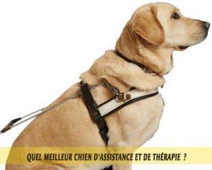 chiens-d'assistance-meilleur-chien-d'Assistance-et-de-Thérapie-07