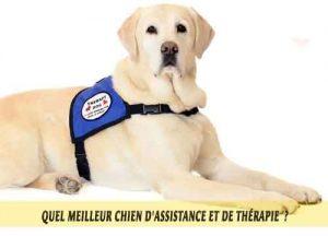 chiens-thérapeutiques-meilleur-chien-d'Assistance-et-de-Thérapie-09