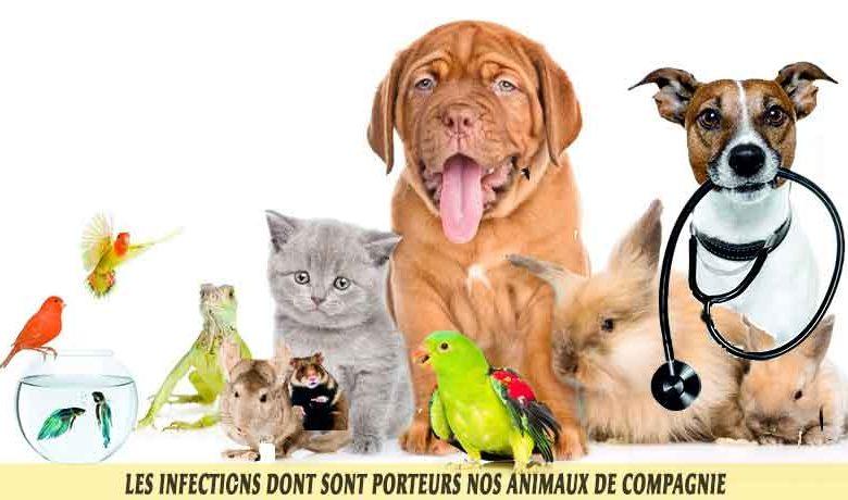 Les-infections-dont-sont-porteurs-nos-animaux-de-compagnie-00