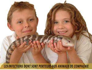 Reptiles et amphibiens et Les-infections-dont-sont-porteurs-nos-animaux-de-compagnie-03