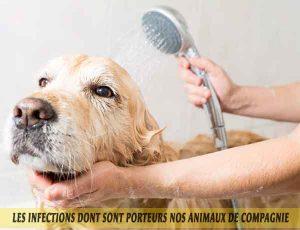 Prendre soin de votre animal en toute sécurité
