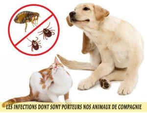 maîtrisez les problèmes de puces et de tiques chez votre animal.