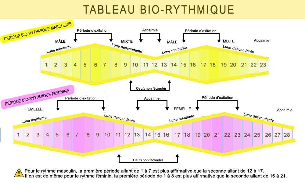 Tableau-des-périodes-bio-rythmiques-des-canaris