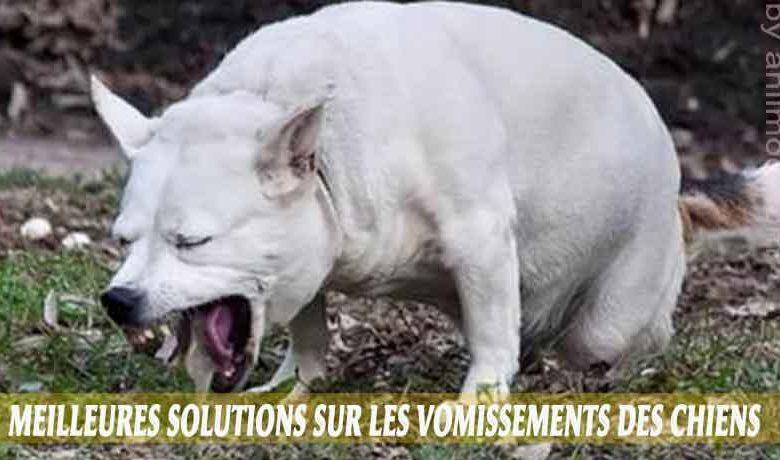 Meilleures-solutions-sur-les-vomissements-des-chiens-00