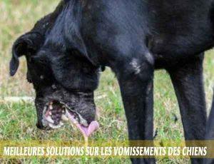 Meilleures-solutions-sur-les-vomissements-des-chiens-01