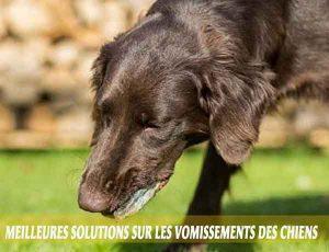 Meilleures-solutions-sur-les-vomissements-des-chiens-02