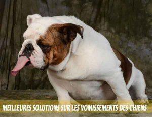 Meilleures-solutions-sur-les-vomissements-des-chiens-03