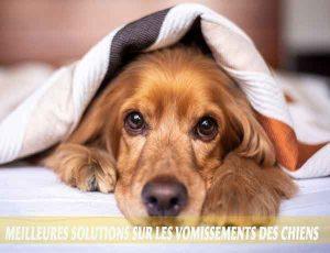 Meilleures-solutions-sur-les-vomissements-des-chiens-04