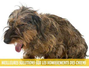 Meilleures-solutions-sur-les-vomissements-des-chiens-05