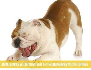 Meilleures-solutions-sur-les-vomissements-des-chiens-06