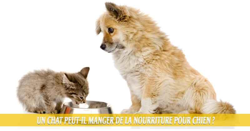 Un-chat-peut-il-manger-de-la-nourriture-pour-chien-01Que faire si mon chat mange accidentellement de la nourriture pour chien ?
