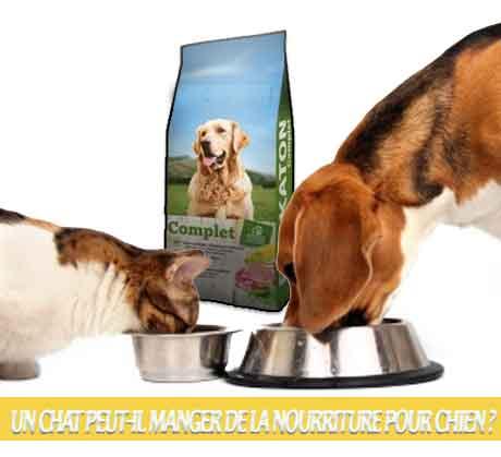 Un-chat-peut-il-manger-de-la-nourriture-pour-chien-03Les aliments pour chiens sont-ils bons pour les chats ?