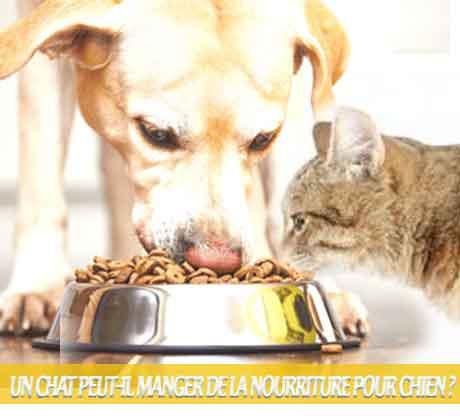 Un-chat-peut-il-manger-de-la-nourriture-pour-chien-04Quelle est la différence entre les aliments pour chiens et les aliments pour chats ?