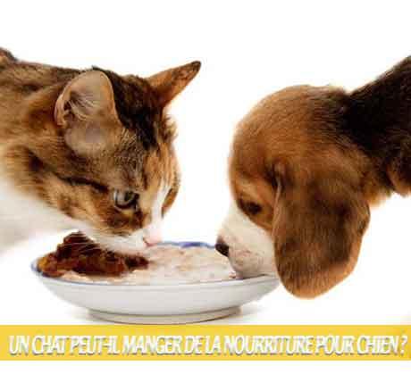 Un-chat-peut-il-manger-de-la-nourriture-pour-chien-05Que faire si mon chien mange la nourriture de mon chat ?