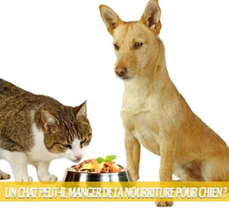 Un-chat-peut-il-manger-de-la-nourriture-pour-chien-07Les chats peuvent-ils manger de la nourriture pour chiens ?