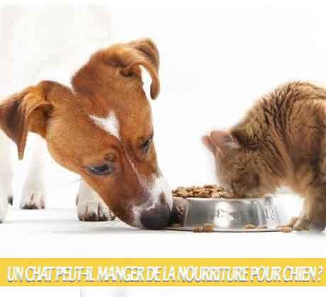 Un-chat-peut-il-manger-de-la-nourriture-pour-chien-08Les aliments pour chiens sont-ils bons pour les chats ?