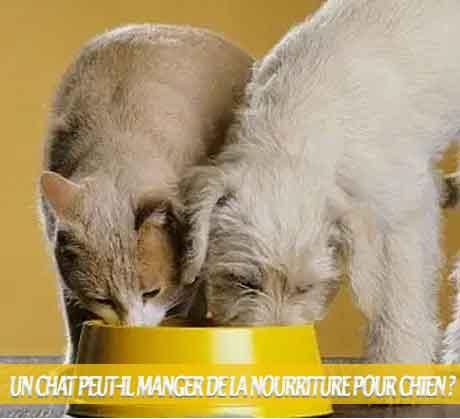 Un-chat-peut-il-manger-de-la-nourriture-pour-chien-EST-IL DANGEREUX POUR LES CHATS DE MANGER DES ALIMENTS POUR CHIENS ?