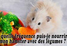 À-quelle-fréquence-puis-je-nourrir-mon-hamster-avec-des-légumes-00