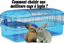 Comment-choisir-une-meilleure-cage-à-lapin-00