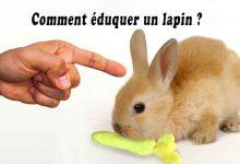 Comment-éduquer-un-lapin-00