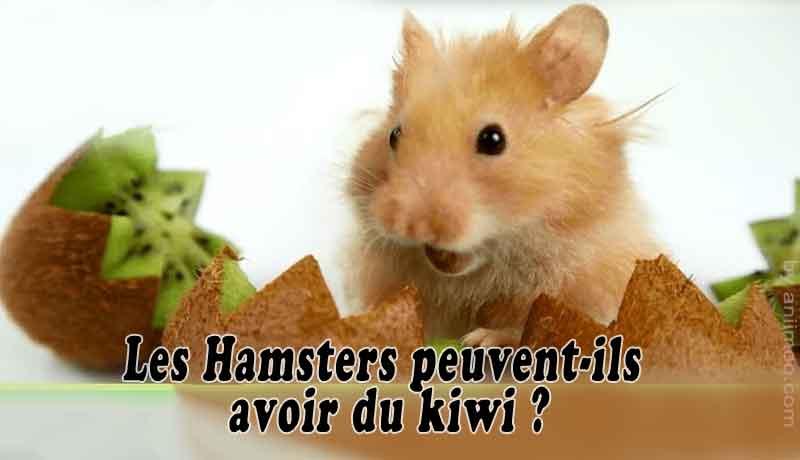 Les-Hamsters-peuvent-ils-avoir-du-kiw-00