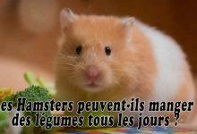 Les-Hamsters-peuvent-ils-manger-des-légumes-tous-les-jours-00
