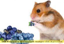 Les-Hamsters-peuvent-ils-manger-des-myrtilles-00