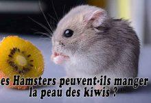 Les-Hamsters-peuvent-ils-manger-la-peau-des-kiwis-00