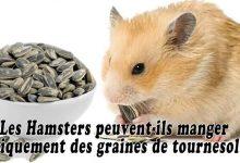 Les-Hamsters-peuvent-ils-manger-uniquement-des-graines-de-tournesol00