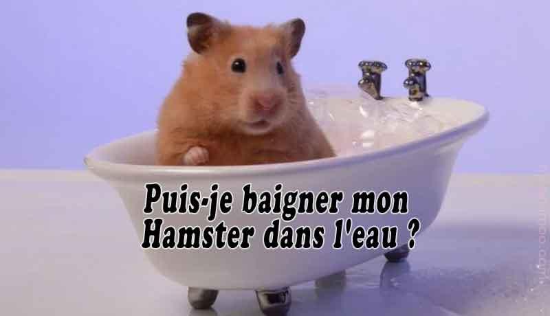 Puis-je-baigner-mon-Hamster-dans-l'eau-00