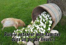 Puis-je-enterrer-mon-hamster-dans-un-pot-de-fleurs-00