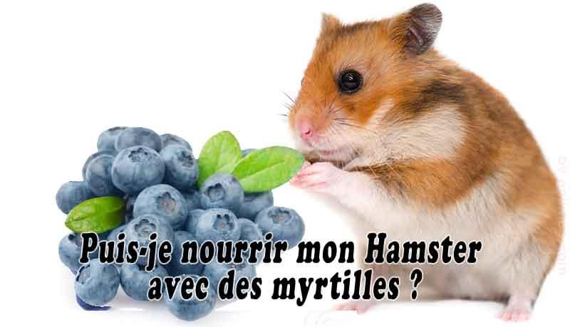 Puis-je-nourrir-mon-Hamster-avec-des-myrtilles-00