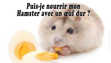 Puis-je-nourrir-mon-hamster-avec-un-œuf-dur-00