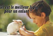 Quel-est-le-meilleur-lapin-pour-un-enfant--00