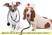 Quelle-est-la-meilleure-assurance-pour-chien-00