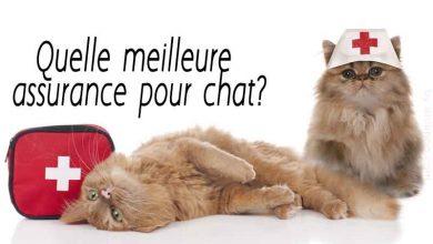 Quelle-meilleure-assurance-pour-chat-00