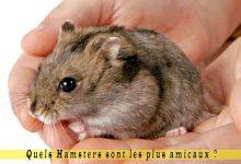 Quels-Hamsters-sont-les-plus-amicaux-00