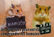 les-Hamsters-peuvent-ils-comprendre-les-humains-00