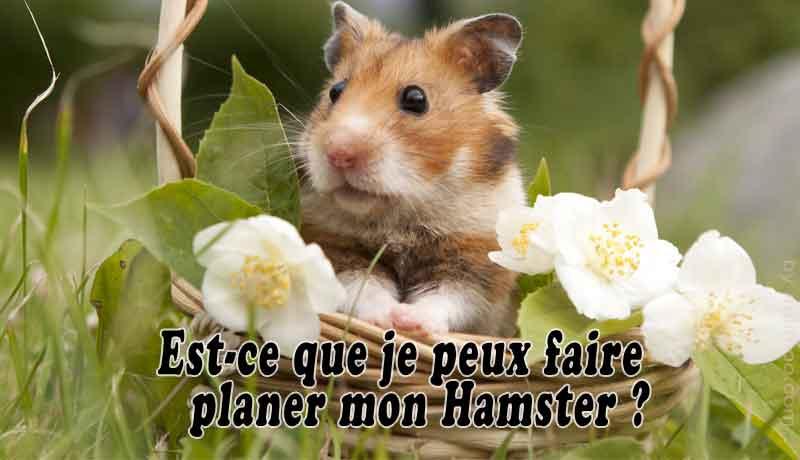Est-ce-que-je-peux-faire-planer-mon-Hamster-00-