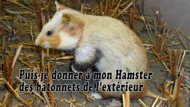 Puis-je-donner-à-mon-Hamster-des-bâtonnets-de-l'extérieur-00